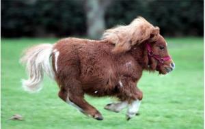 Låt hästarna springa, som Tomas Ledin brukar säga